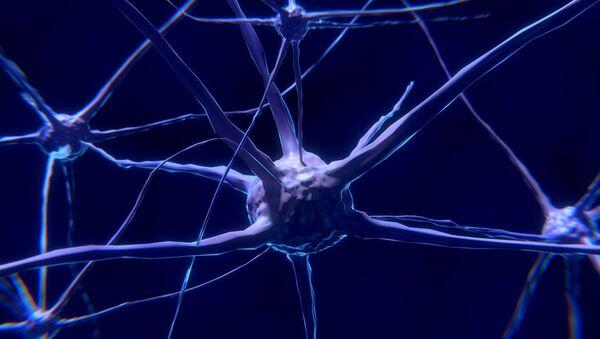 Neurone (image d'illustration) - Sputnik France