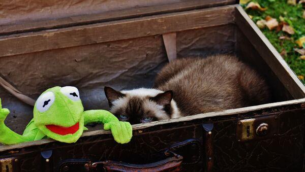 un chat dans une valise - Sputnik France