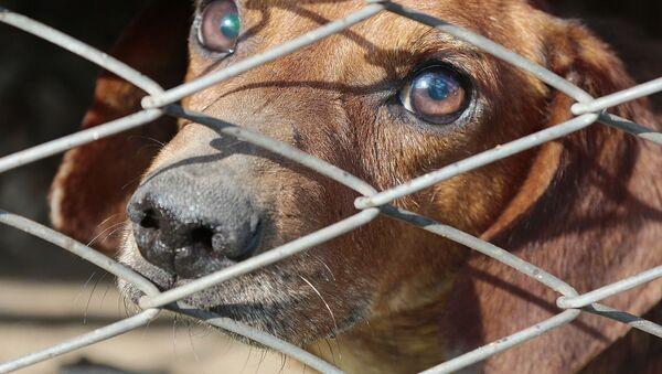 un chien dans une cage - Sputnik France