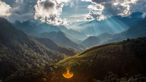 une forêt au Vietnam - Sputnik France