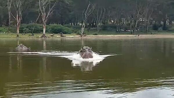 Un hippopotame enragé prend en chasse un bateau touristique  - Sputnik France