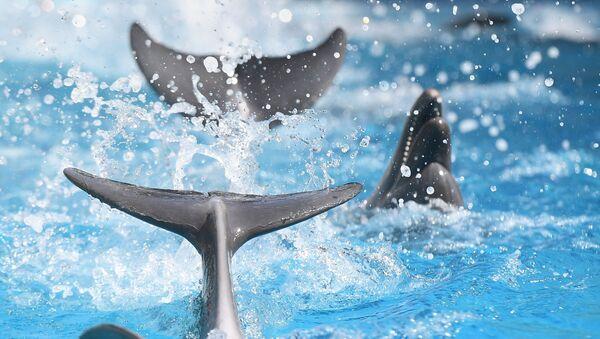 Des dauphins  - Sputnik France