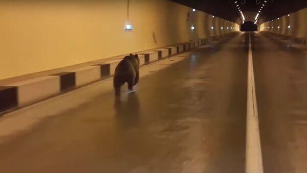 Quand on veut voyager en prenant un raccourci: un ours passe la frontière par un tunnel routier - Sputnik France