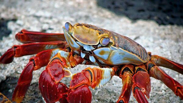 Crabe - Sputnik France