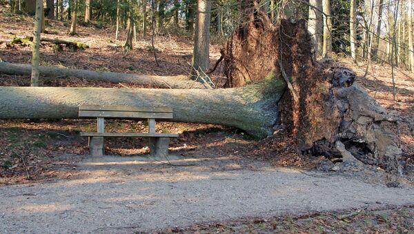 Un arbre tombé - Sputnik France