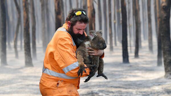 Incendies en Australie: des images post-apocalyptiques et un milliard d'animaux tués  - Sputnik France