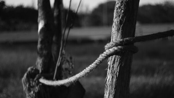 Corde sur arbre - Sputnik France