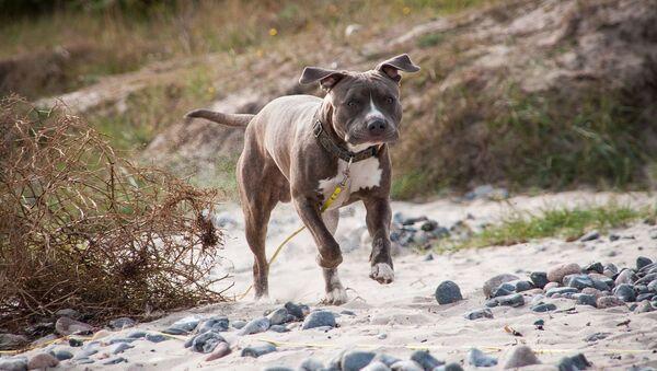 Un chien - Sputnik France