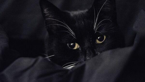 Un chat noir et blanc - Sputnik France