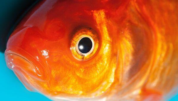 Un poisson - Sputnik France