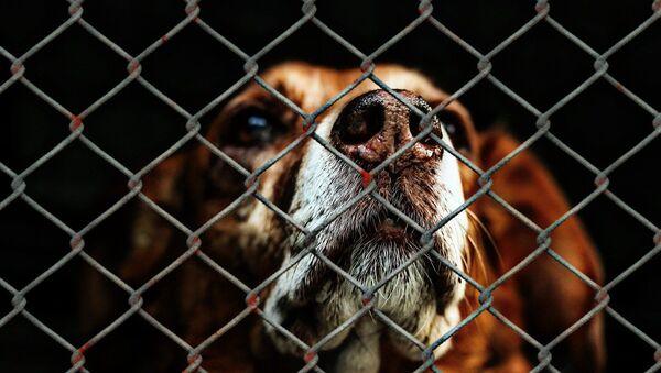 Un chien dans un refuge (image d'illustration) - Sputnik France