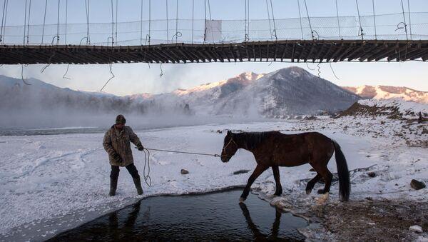 Opération de sauvetage de chevaux tombés dans une rivière gelée - Sputnik France
