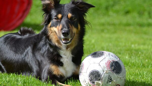 Un chien et un ballon - Sputnik France