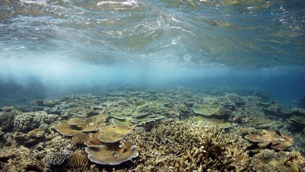Moore Reef underwater - Sputnik France