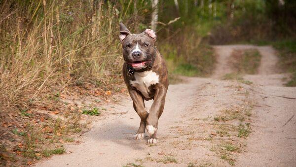Un chien courant - Sputnik France