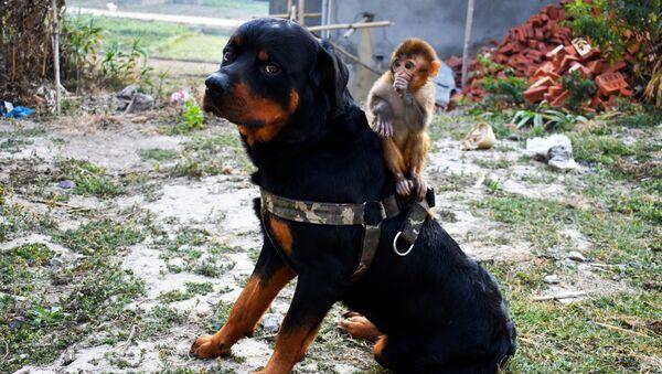 Un chien et un singe - Sputnik France