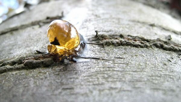Gomme naturelle - Sputnik France