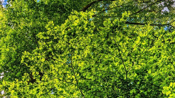 Un arbre - Sputnik France