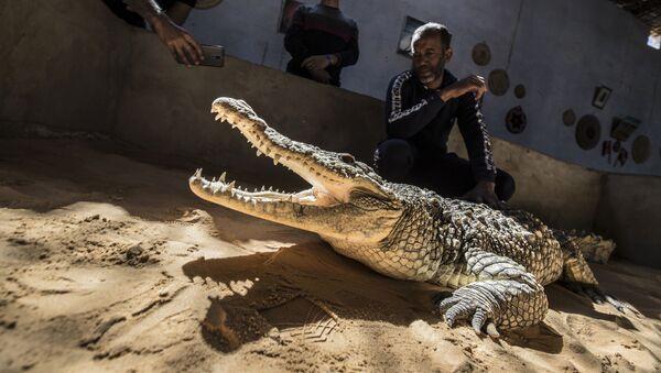 Des crocodiles sont des animaux de compagnie pour les habitants d'un village de Nubie  - Sputnik France