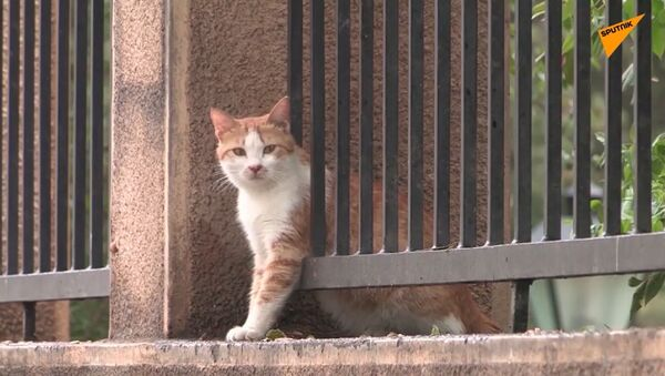 De nombreux animaux de compagnie abandonnés au Liban de peur qu'ils puissent transmettre le Covid-19 - Sputnik France