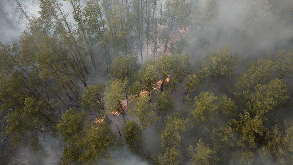 Un incendie de forêt dans la zone d'exclusion de la centrale nucléaire de Tchernobyl  - Sputnik France