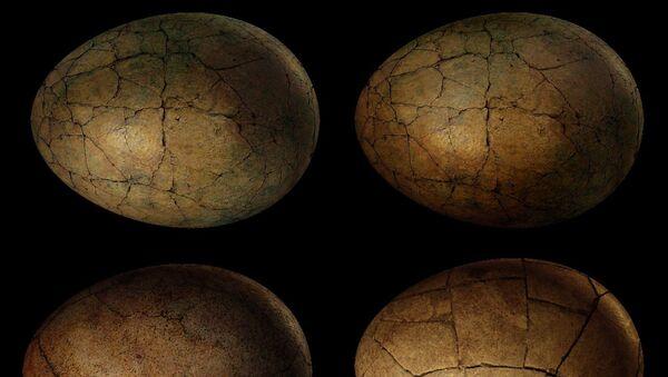 Des œufs de dinosaures (image d'illustration) - Sputnik France