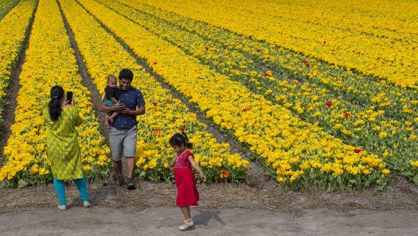 Les célèbres tulipes de Hollande elles aussi victimes du coronavirus   - Sputnik France