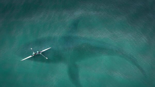 Silhouette d'un requin dans l'eau (image d'illustration) - Sputnik France