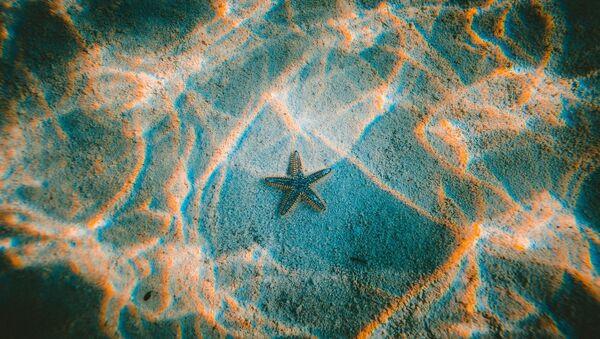 L'étoile de mer - Sputnik France