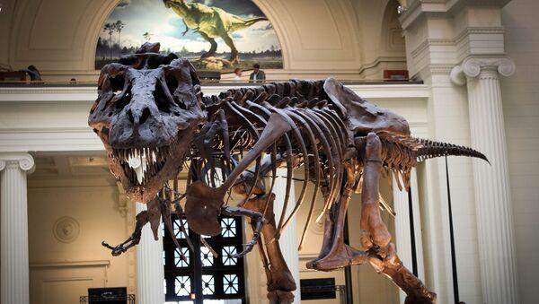 Squelette d'un dinosaure dans un musée - Sputnik France
