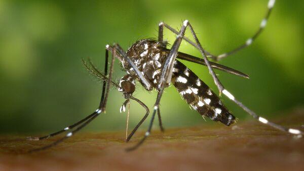 Le moustique tigre (image d'illustration) - Sputnik France