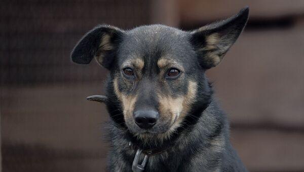 Un chien (image d'illustration) - Sputnik France