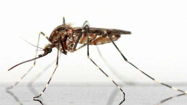 Un moustique - Sputnik France