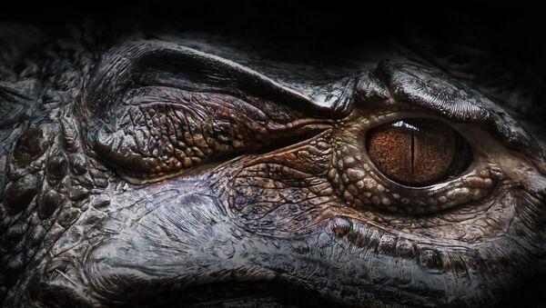 Oeil d'un alligator  - Sputnik France