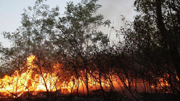 Un incendie de forêt (archive photo) - Sputnik France