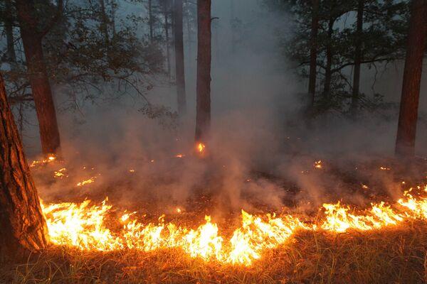 Russie: 5.500 ha de réserves naturelles sont la proie des flammes - Sputnik France