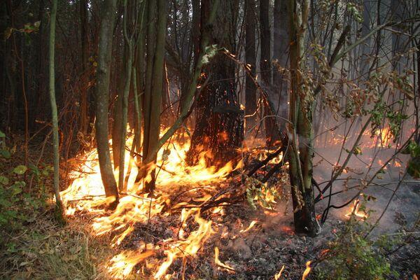 Les incendies qui font rage depuis la mi-juillet en Russie centrale - Sputnik France
