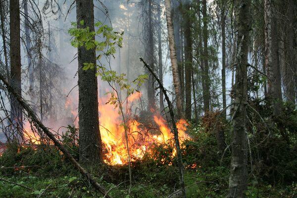 Incendies en Sibérie: 1.200 sans-abri, plusieurs localités en flammes - Sputnik France