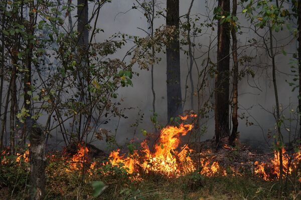 Incendies en Russie - Sputnik France