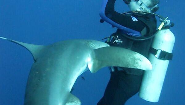 Un requin avec un couteau dans la tête demande de l'aide à un plongeur (VIDEO) - Sputnik France