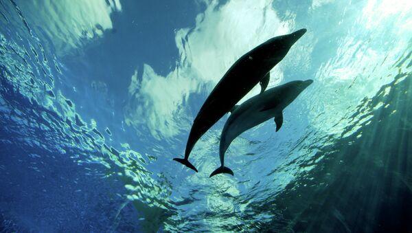 Два дельфина - Sputnik France