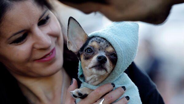 Женщина держит свою собаку во время митинга против нового закона, разрешающего отлавливать собак в общественных местах. Бухарест - Sputnik France