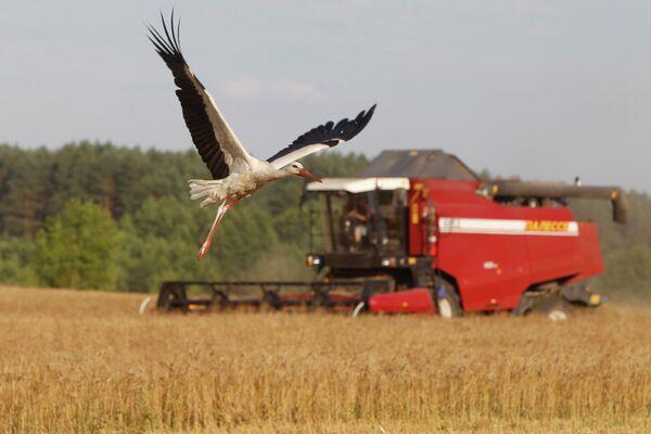 Sanctions: la Russie protège les agriculteurs nationaux (Poutine) - Sputnik France